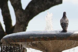 Grafica e Formazione - Francesca Gallesio - Fotografia Colombi alla fontana